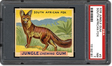 South African Fox